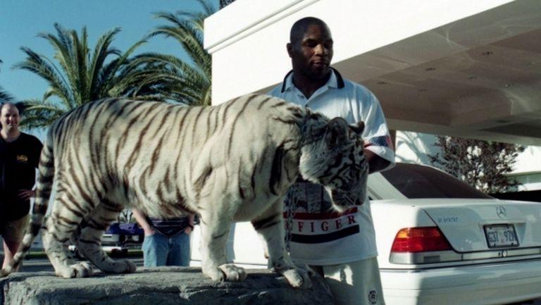 Тайсън с признание за тигрицата си