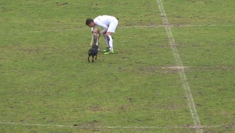 Играч на Славия изнася кучета от терена по време на контрола