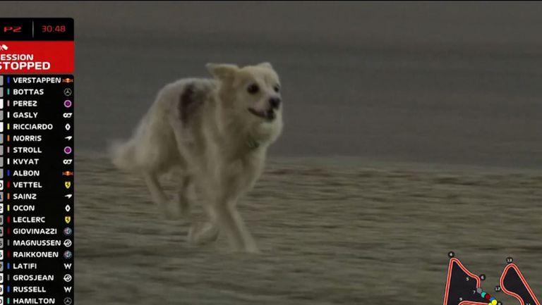 Бездомно куче спря тренировка във Формула 1