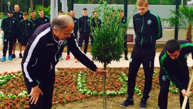 Шампионите от Лудогорец засадиха маслиново дръвче в Албена