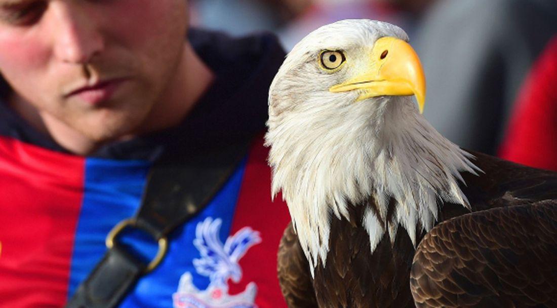 Фен на Чарлтън в съда за нападение срещу орела на Кристъл Палас