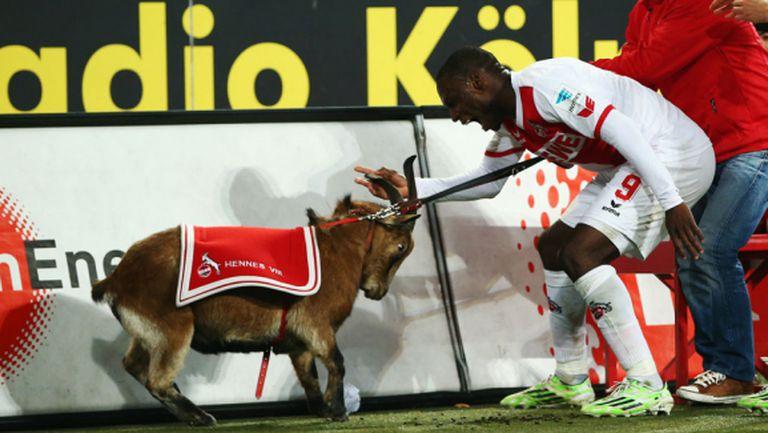 Извиниха се на козела от Кьолн