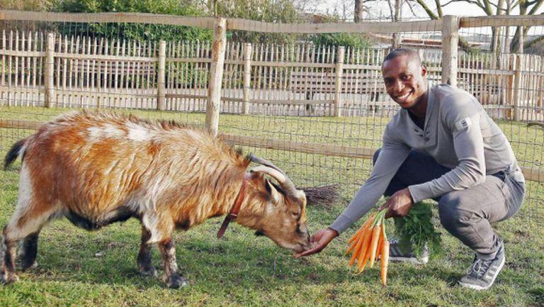 Моркови и гребен като извинение за козела на Кьолн