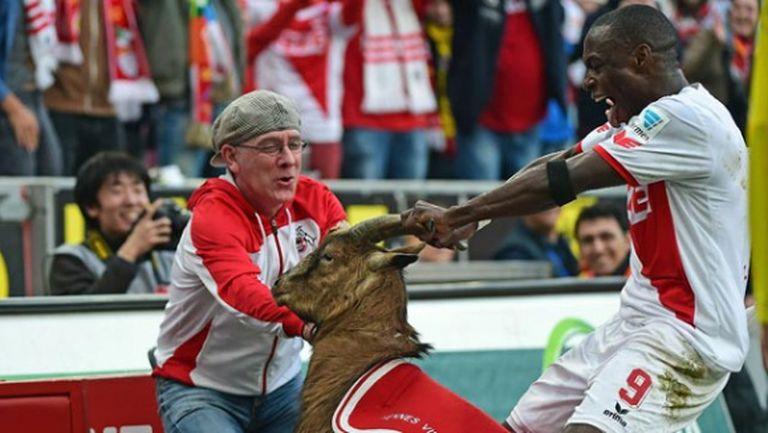 Кьолн продаде играча, който хвана козела за рогата