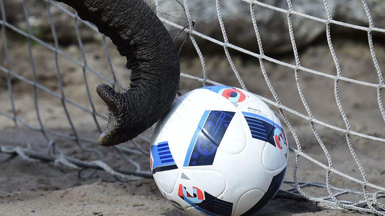 Слоницата Яшода направи своята прогноза за мача на Германия с Унгария