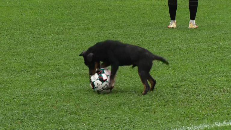 Куче показa техника в босненското първенство