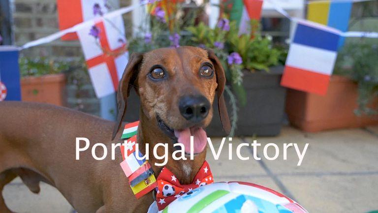 Дакел отреди победа на Португалия срещу Франция