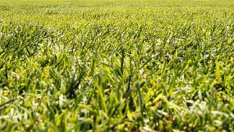 Пак тревата ще мъчи Барса