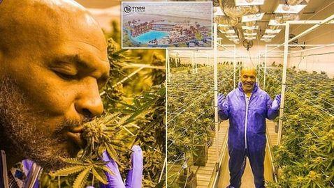 Майк Тайсън: Ставам сутрин, пуша хубава трева и отивам в рая