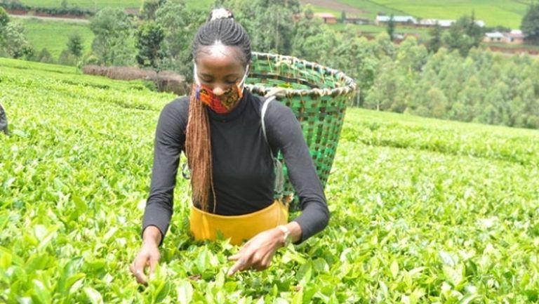 Световната рекордьорка в стийпълчейза помага в семейната ферма по време на пандемията